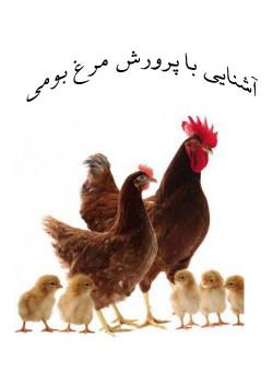 آشنایی با اصول پرورش مرغ بومی