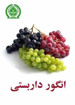 انگور داربستی
