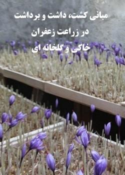 کشت، داشت و برداشت در زراعت زعفران خاکی و گلخانه ای