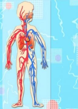 وظایف دستگاههای داخلی بدن انسان